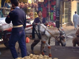 Henna dyed donkey in Pakistan