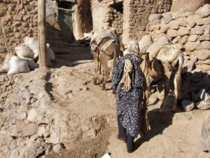 Donkey's in Iran, a woman uses them for transporting goods (click to enlarge)