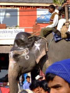 Elephant in Pokhara Parade