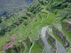 Lush green rice terraces of Batad, The Philippines (click to enlarge)