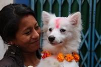 Dog Festival Tihar in Kathmandu