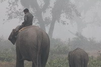 Elephants and park rangers work together in Chitwan Nepal