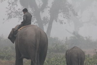 Forest patrols my a ranger and elephant in nepal resize