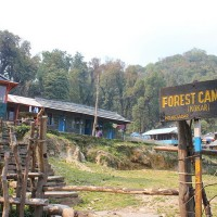 Forest Camp on the Mardi Himal Trek, Nepal